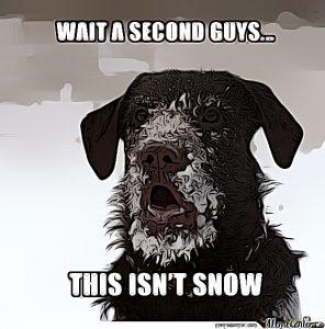 cocaine-memes-dog
